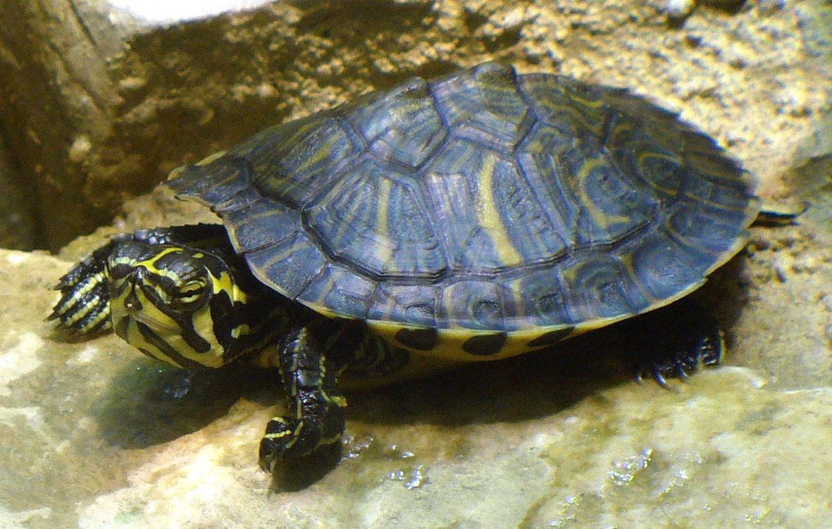 Anmerkungen zu Reptilienbörsen