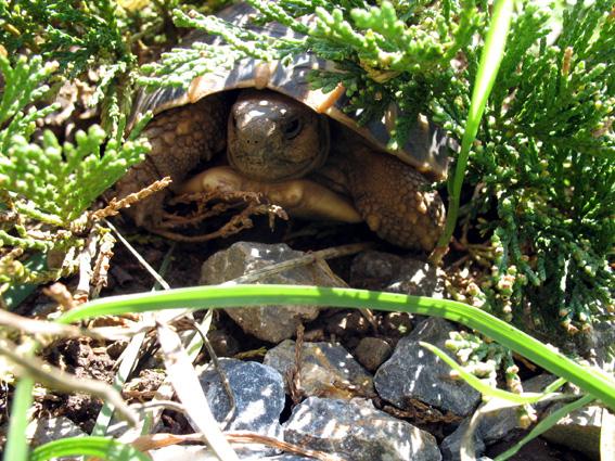 Versicherungsschutz für Schildkröten?