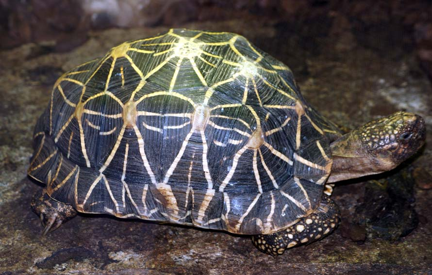 Schildkrötenschmuggler in Frankfurt verurteilt - Eine Meldung und ein paar Anmerkungen zur journalistischen Genauigkeit