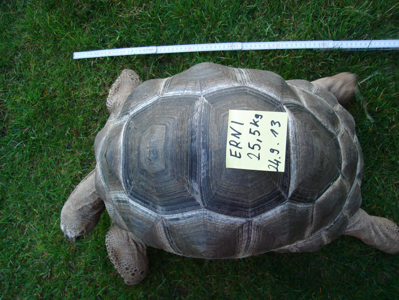 Aldabras gestohlen