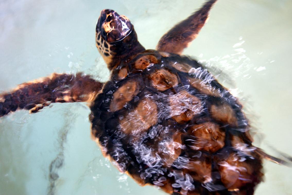 Molly, Nikka und die anderen - Die Meeresschildkrötenstation von Pula