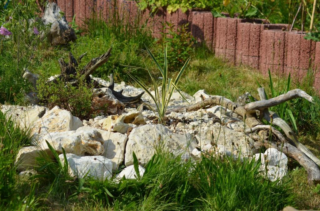 Abb. 3 Große Steine, halb eingegraben und Wurzeln zur Auflockerung