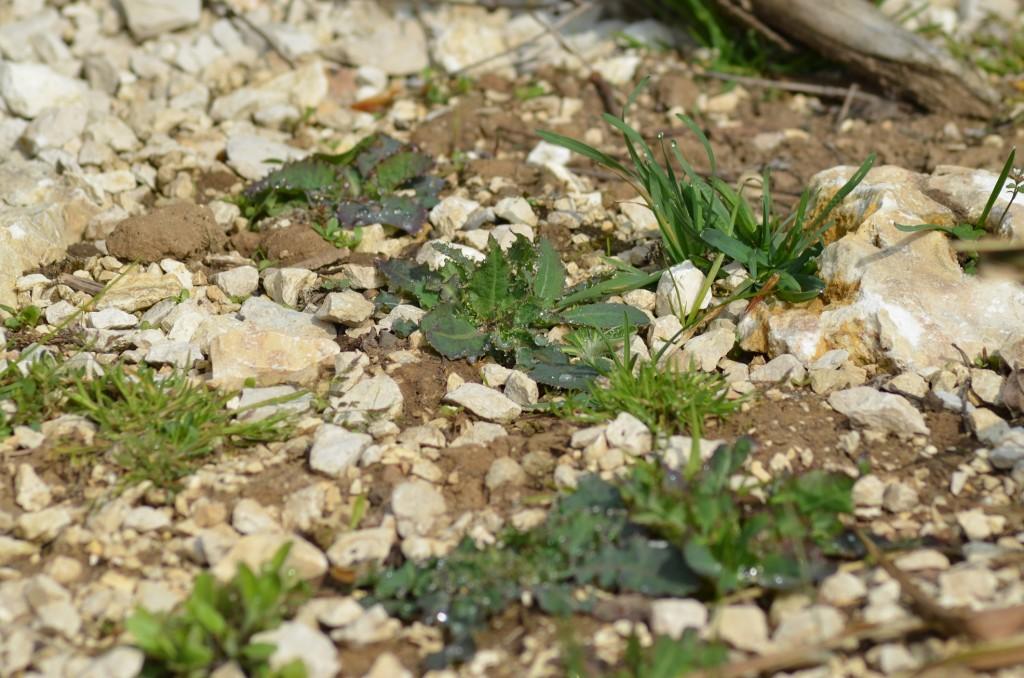 Abb. 5 Langsam erscheinen nach 2 Monaten die ersten Futterpflanzen, der Boden wirkt schon natürlicher