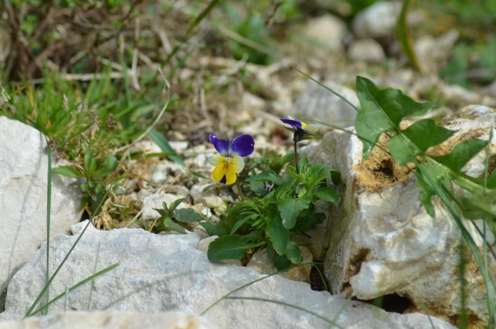 Abb. 7 Futterpflanzen im Kalkschotter...