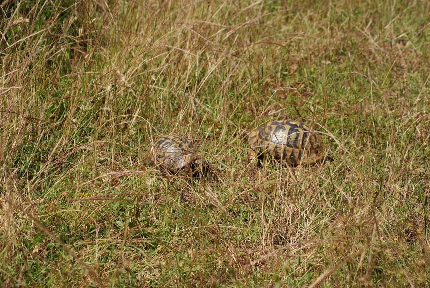 Anmerkungen zur Wildtierhaltung (Teil 2): Kuscheln