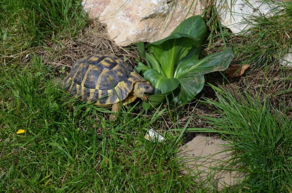 Festmahl für eine Schildkröte