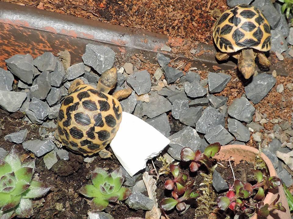 Vorbereitungen für die kalte Jahreszeit mit winterwachen Landschildkröten