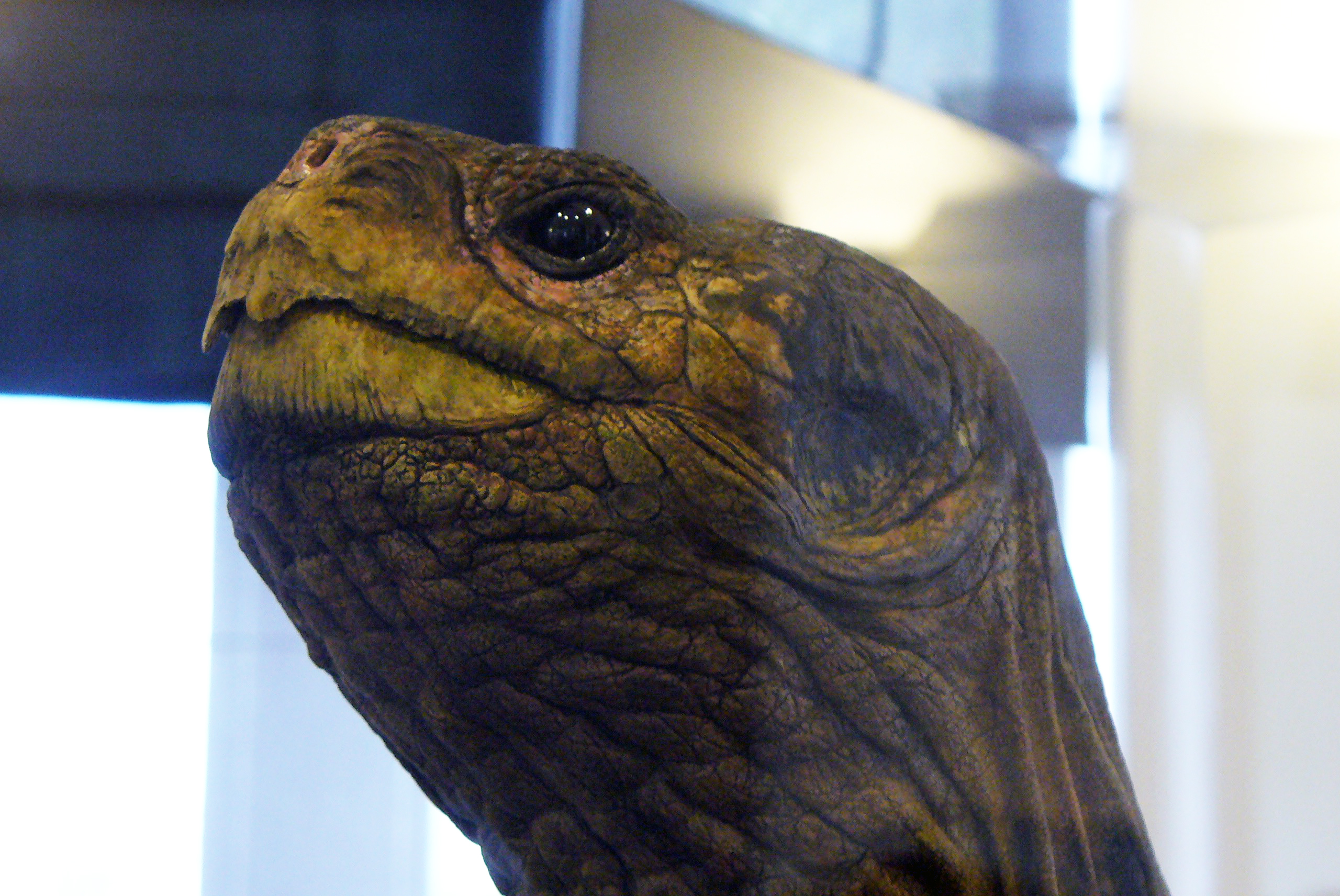 Auf Schildkrötensafari mit Elke Wallrapp (Folge 26)