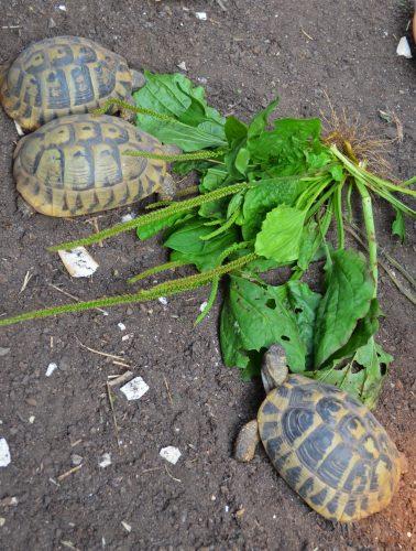 Auswirkungen der ungewöhnlich hohen Niederschlagsmengen 2016 (Teil 1): Auswirkungen auf die Futterpflanzen