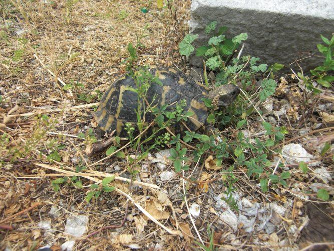 Erzähl mal (Folge 2): Schildkrötenliebe fängt in der Kindheit an...