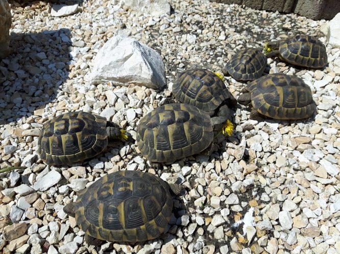 Grundsanierung unseres Schildkrötengeheges
