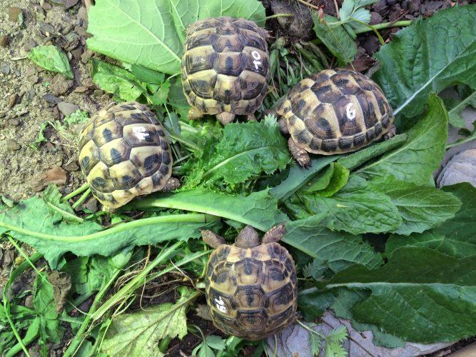 Gestohlene Schildkröten noch immer nicht wieder da.