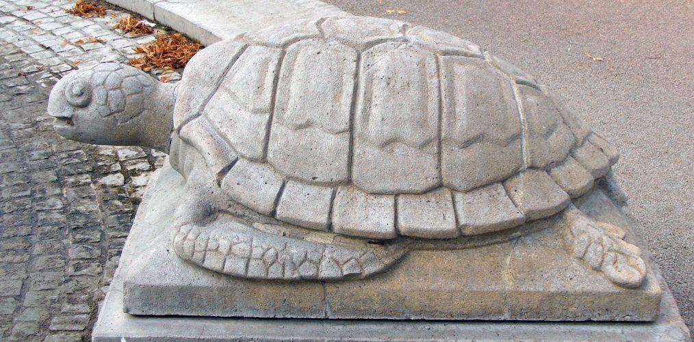 Auf Schildkrötensafari mit Elke Wallrapp (Folge 46)