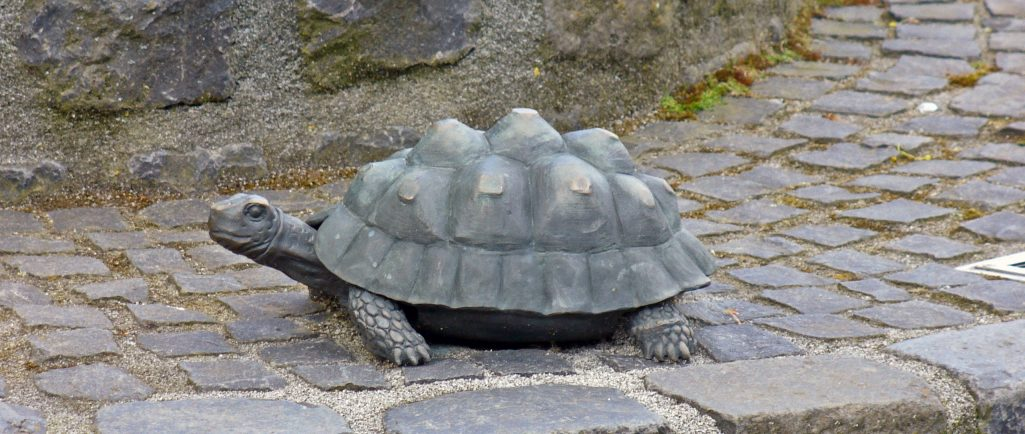 Auf Schildkrötensafari mit Elke Wallrapp (Folge 48)