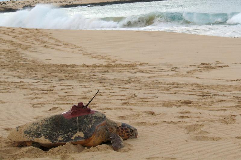 Beobachtungsplattform Meeresschildkröte