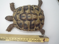 Hessen: Digitale Passfotos für die Schildkröte jetzt möglich