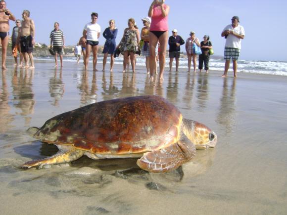 Zwei Schildkröten gerettet, eine tot geborgen