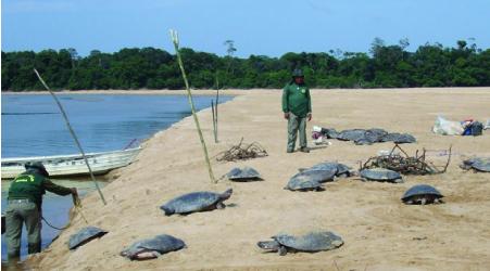 327 Schildkröten gerettet