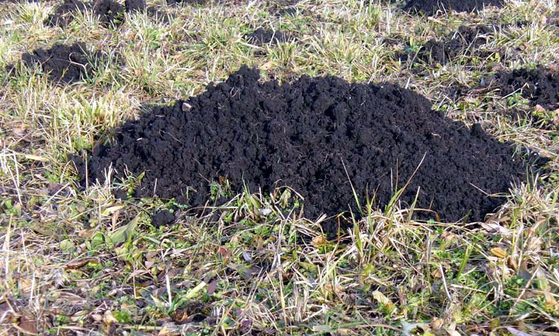 Schwarzes Gold Maulwurfserde – ein wertvoller Bodenschatz