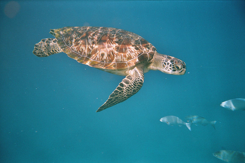 Erfolgreiche Meeresschildkröten-Nistsaison im Iran