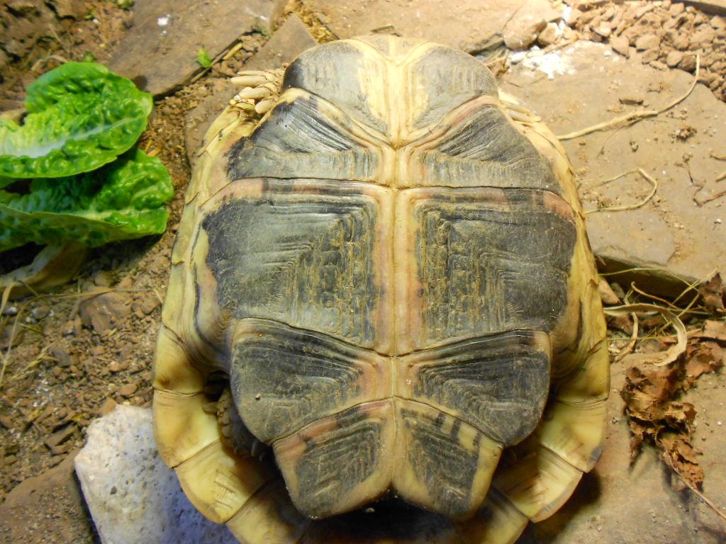Nachgefragt beim Tierarzt: Sepsis