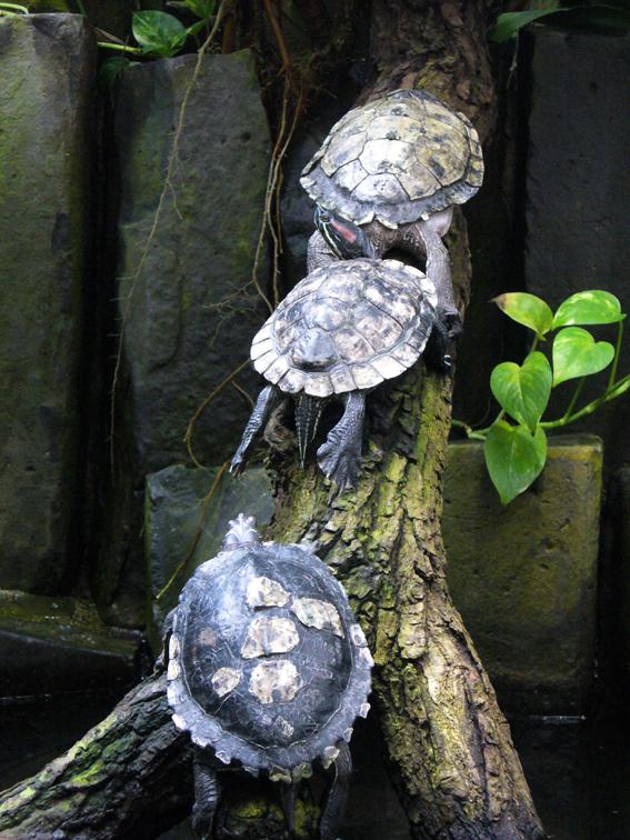 Schildkröten hören nur im Wasser gut