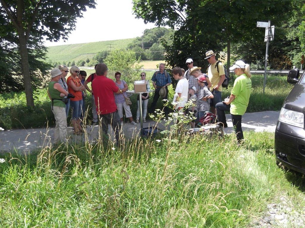 Kräuterexkursionen der Landschildkröten-Auffangstation Kitzingen e.V. / Ein Bericht von Sandra Malguth