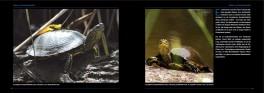 Faszination Schildkröte - ein wunderbares Buch