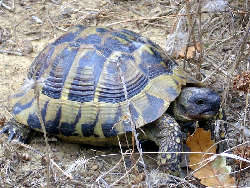Beim Einkaufen Schildkrötenprojekte unterstützen - Nichts leichter als das