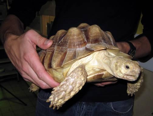 Entsorgte Riesenschildkröten