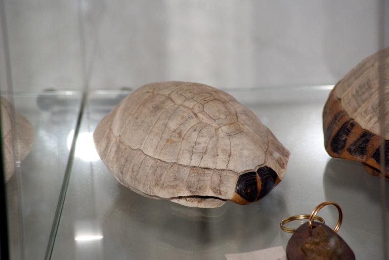 Calciumernährung (#3): Wozu brauchen Schildkröten Calciumcarbonat?