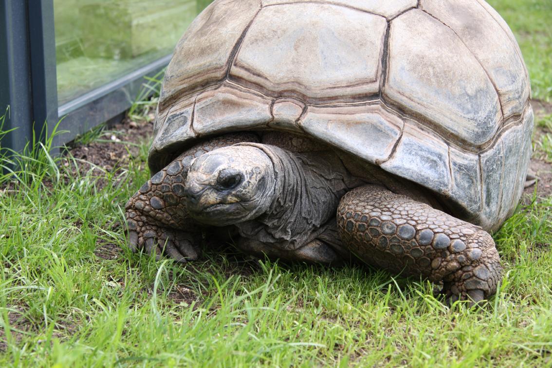 Neues Schildkrötenhaus in Saarbrücken