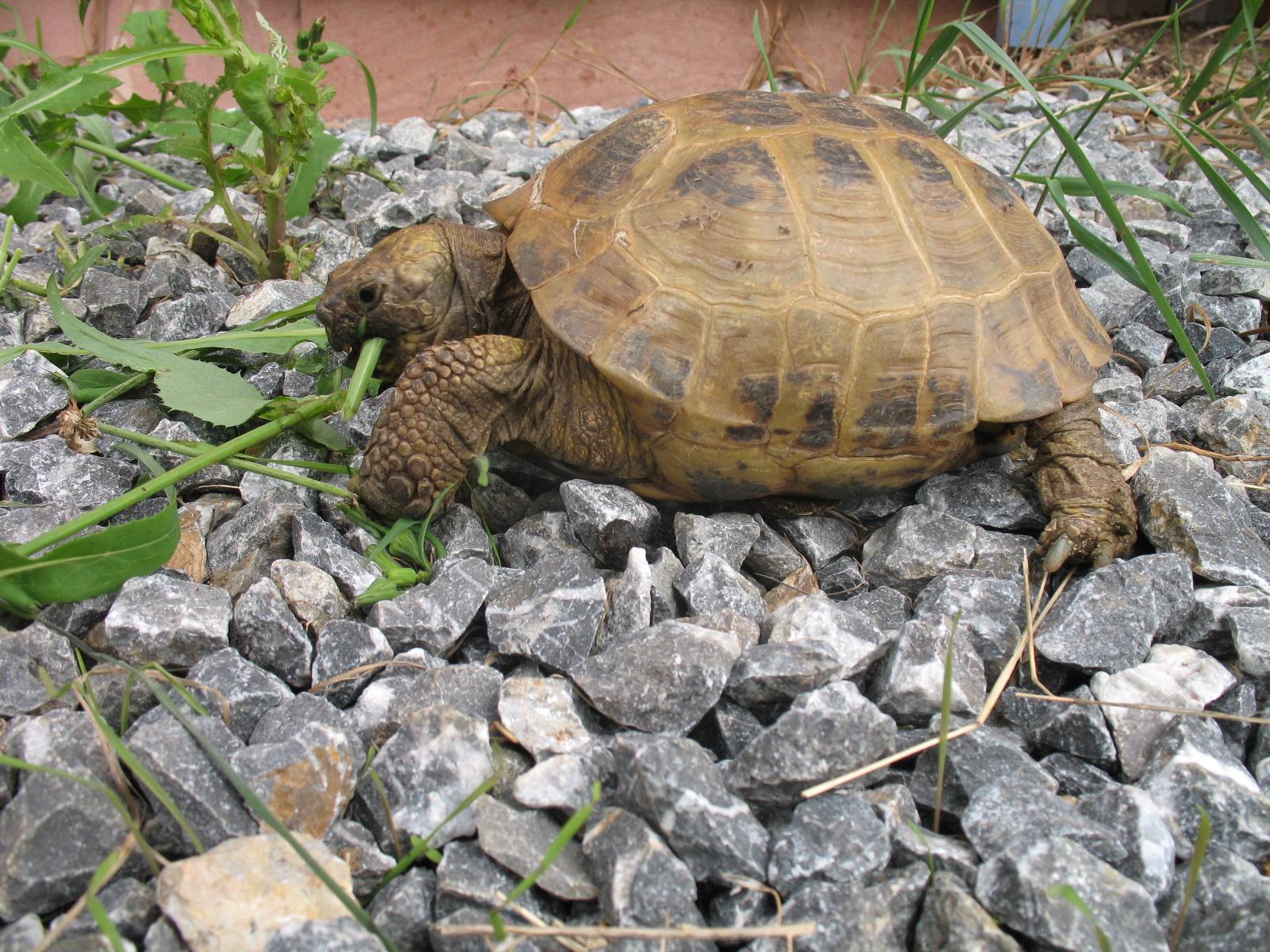 Für meine Schildkröten muss es Jurakalk sein – Teil 1 Die Idee und die Beschaffung