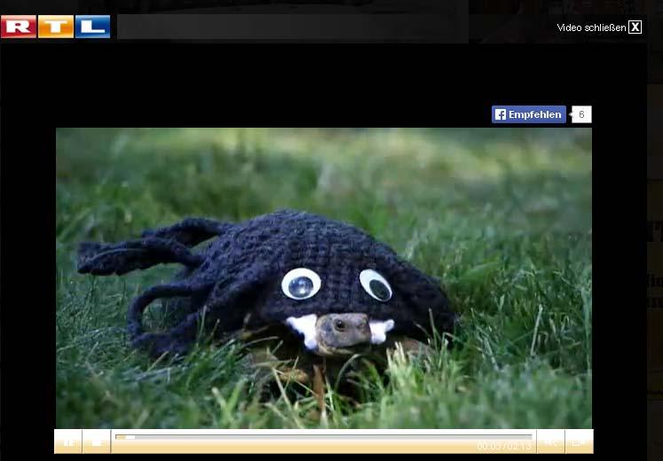 Süße Wollpullis für die Schildkröte? - Alles andere als artgerecht