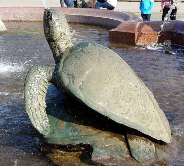Auf Schildkrötensafari mit Elke Wallrapp (Folge 2)