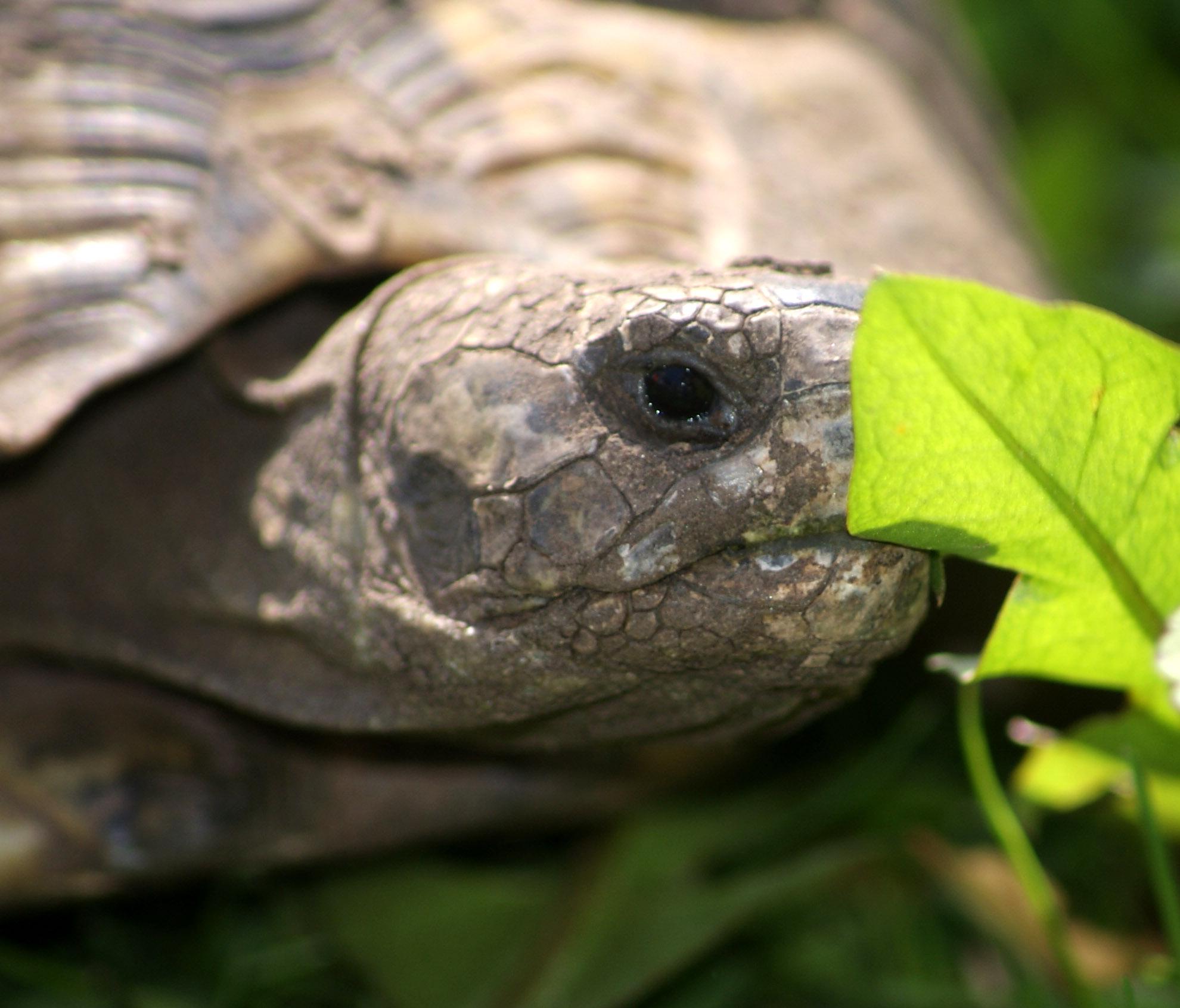 Anmerkungen zur Wildtierhaltung (Teil 1): Schildkröten sind Wildtiere