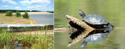 Ein Refugium für Sumpfschildkröte & Co
