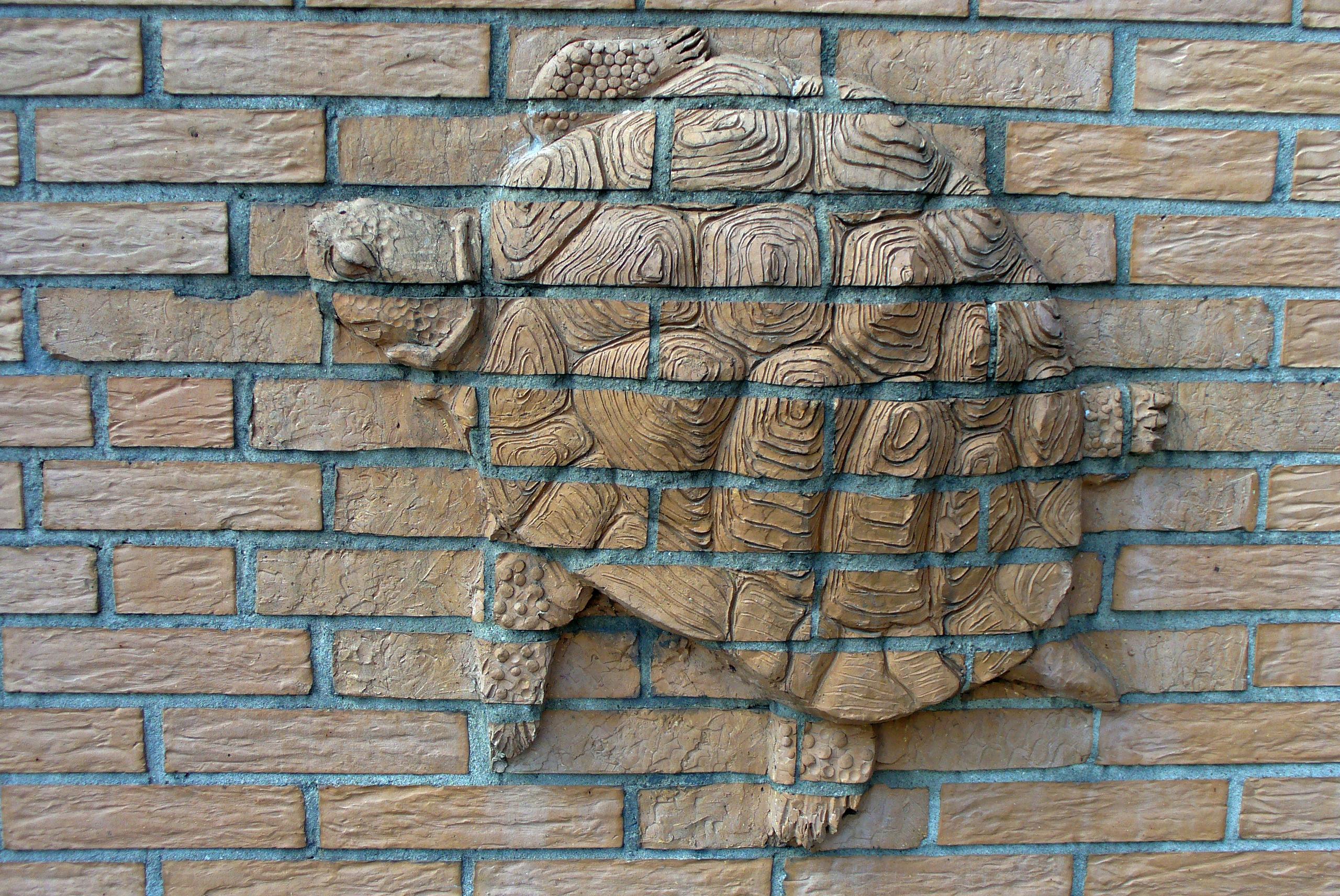 Auf Schildkrötensafari mit Elke Wallrapp (Folge 12)