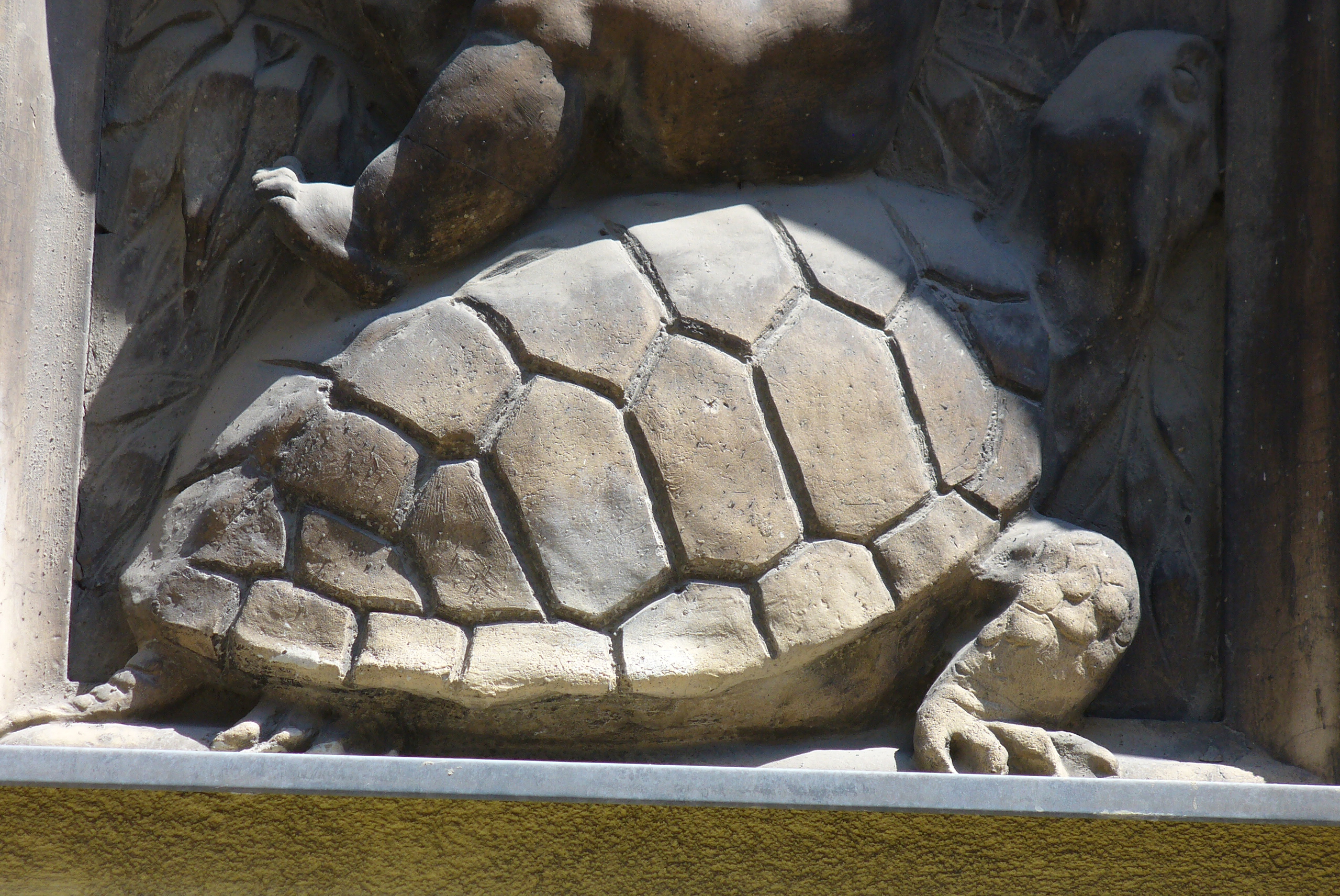 Auf Schildkrötensafari mit Elke Wallrapp (Folge 20)
