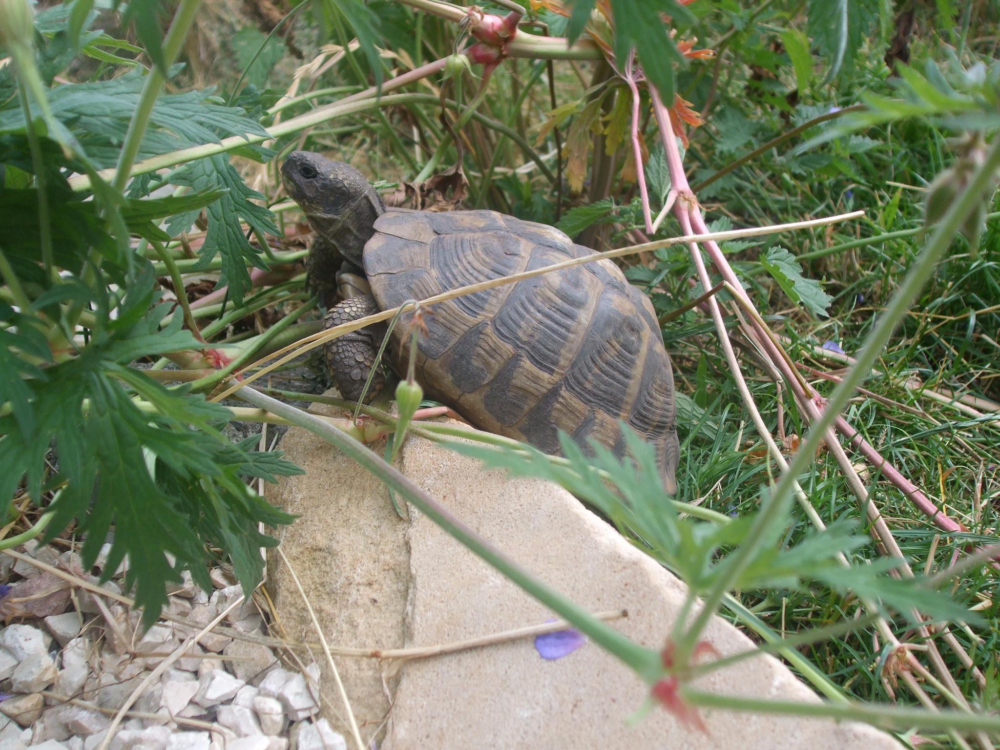 Kein Obst für Europäische Schildkrötenarten