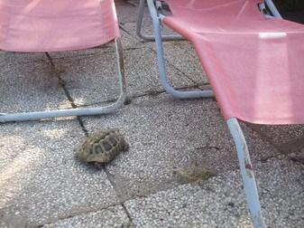 Schildkröte gefunden - und nun?