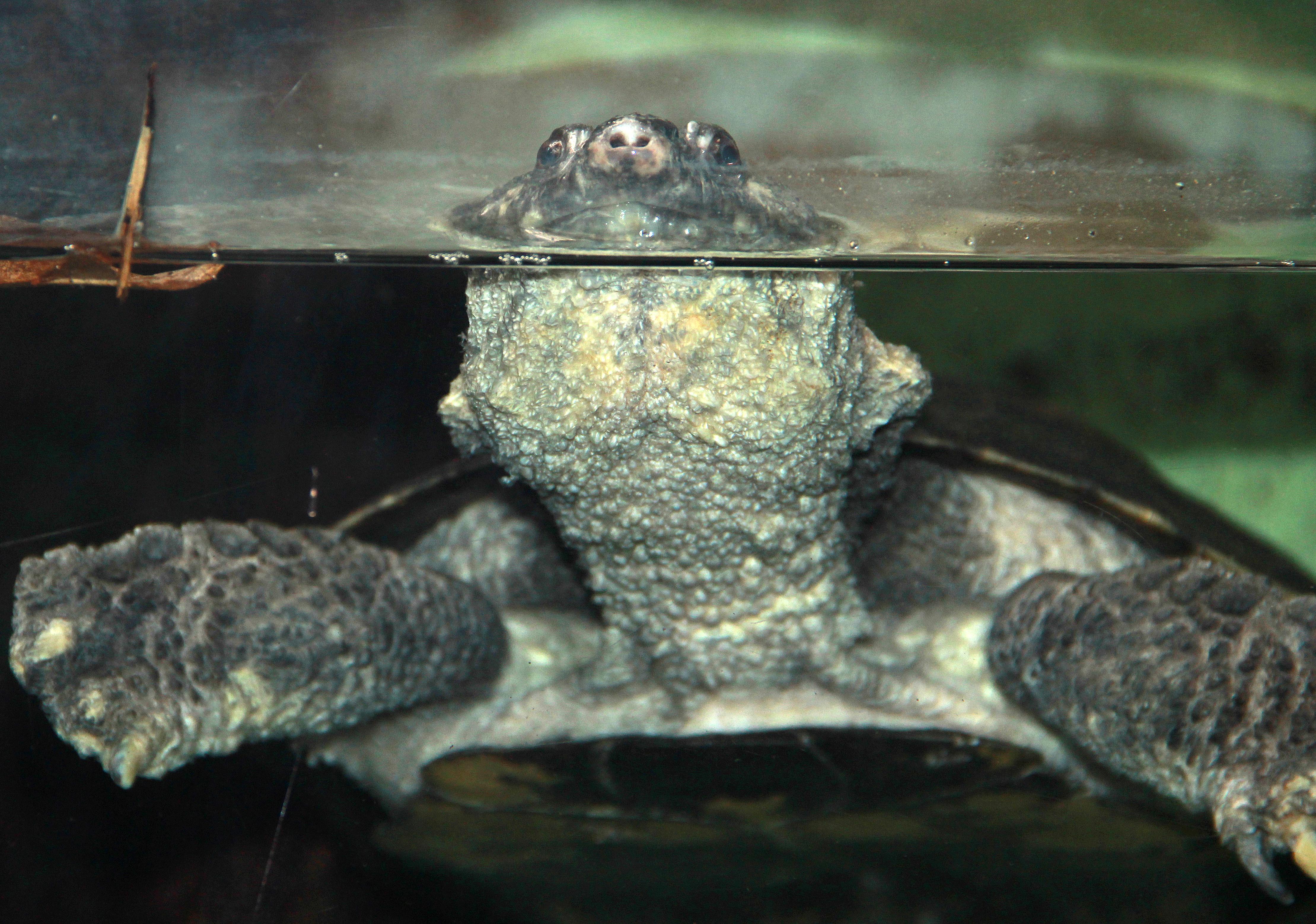 Zweiter Teil der Umfrage zur Ernährung von Schildkröten