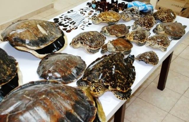 Bitte keine Schildkrötenpanzer kaufen!