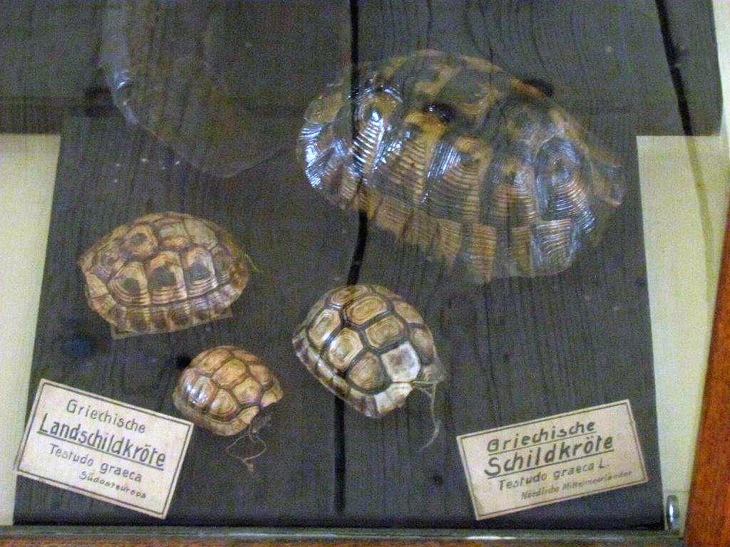 Zu Besuch im Naturalienkabinett Waldenburg