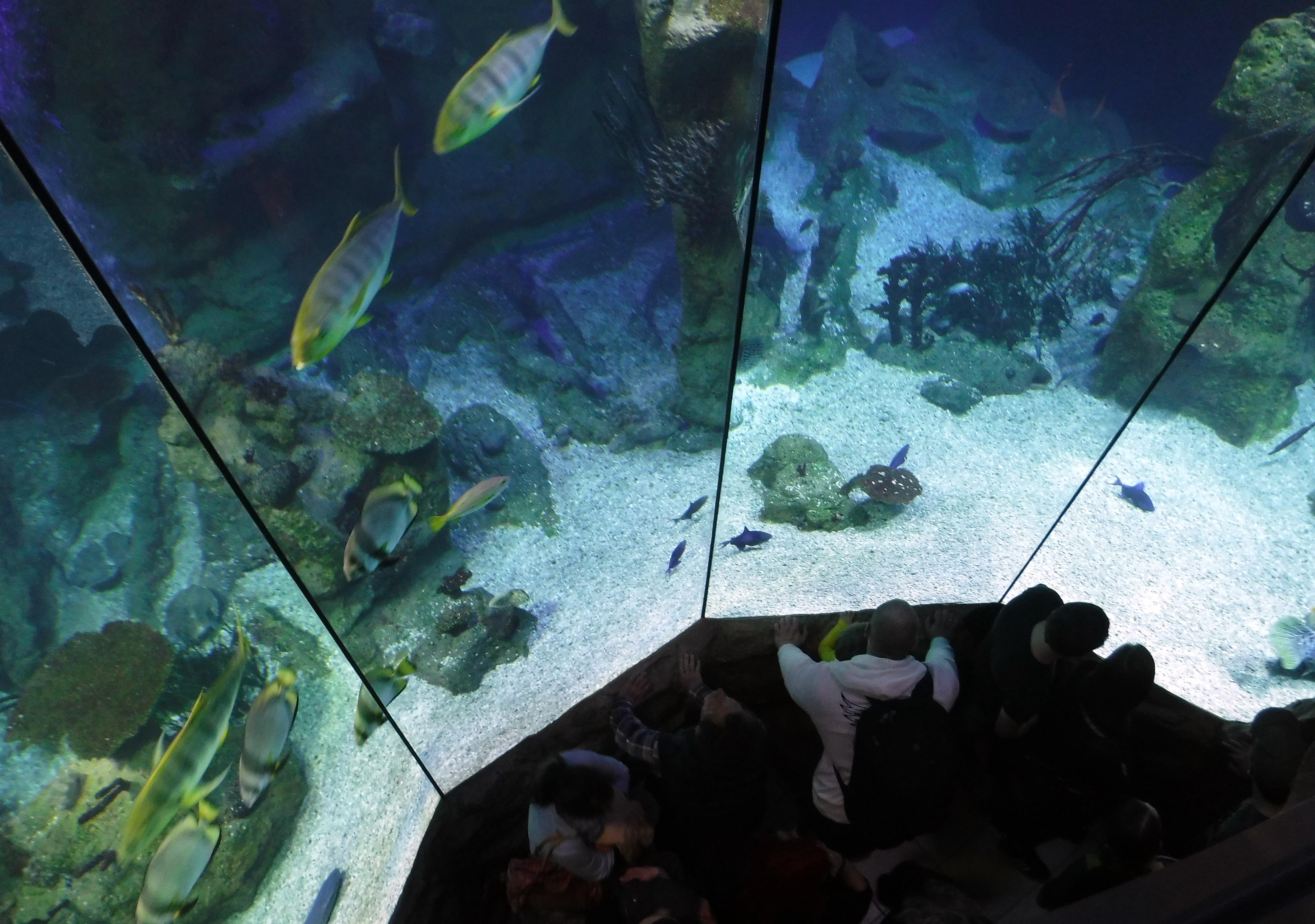 Zu Besuch im Haus des Meeres (Teil 2): Puppi