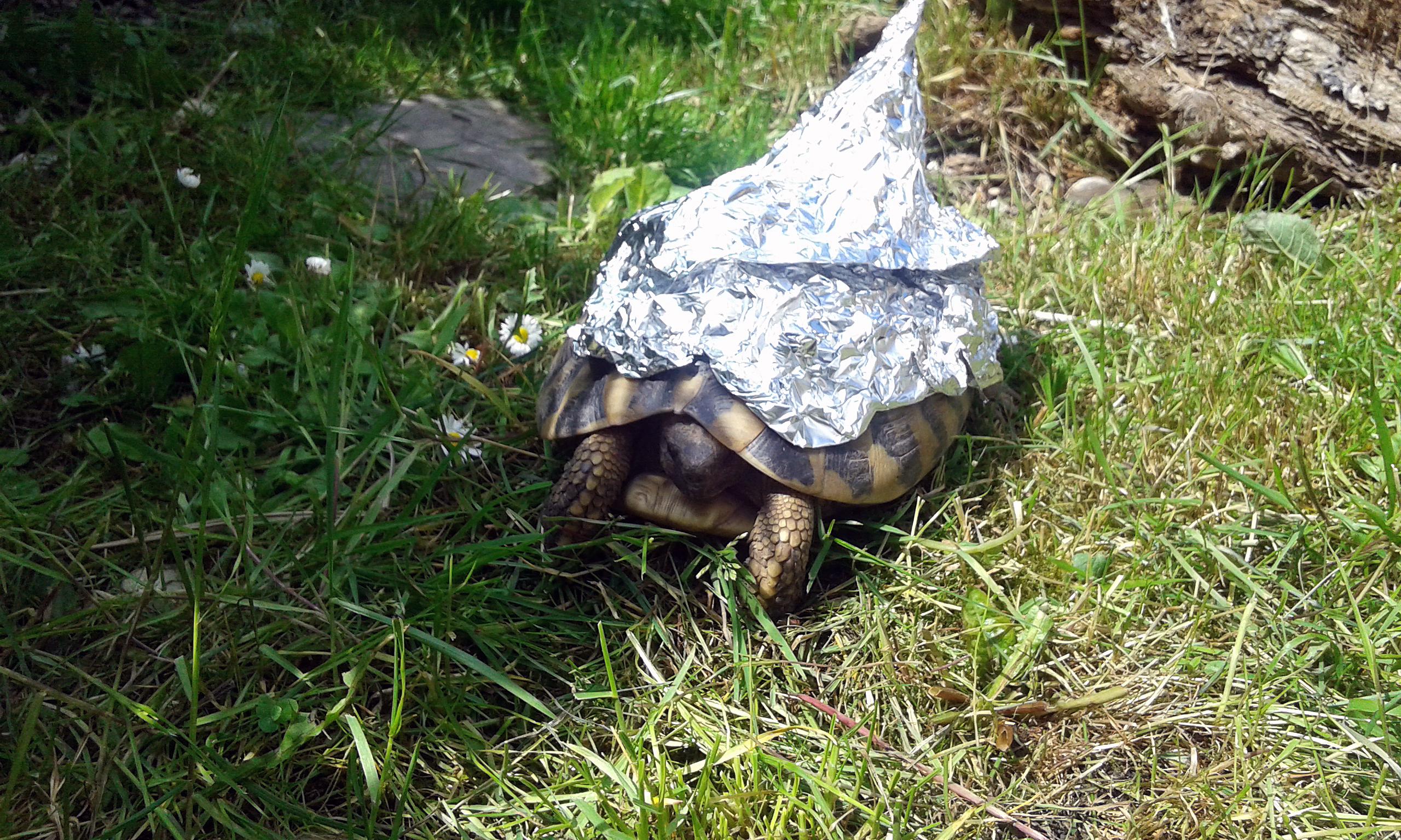 Sicherer Schutz für Schildkröten