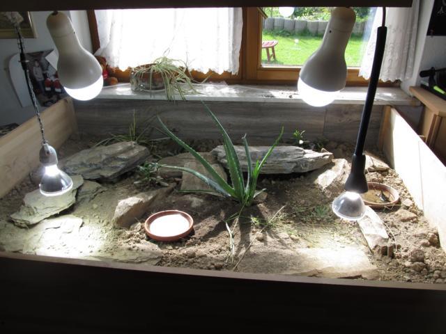Neues Innengehege für unsere Spaltenschildkröten