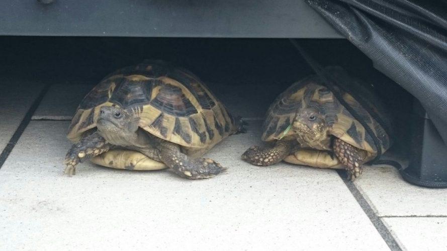 Erzähl mal (Folge 4): Alles für die Schildkröten...