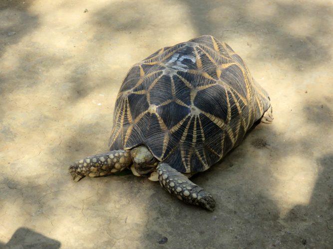 Und es gibt sie doch... … die Schildkröten in Myanmar