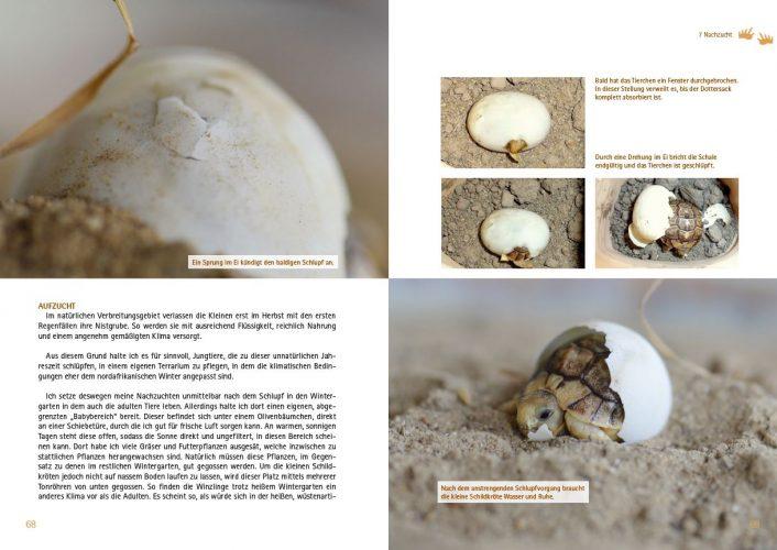 Verlagsankündigung: Christine Dworschak: Testudo kleinmanni - Meine Erfahrungen mit der Haltung der Ägyptischen Landschildkröte